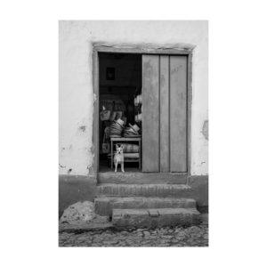 01Cuba03_DeNardo_Laura_1Guard_Dog_Cuba-Edit_800